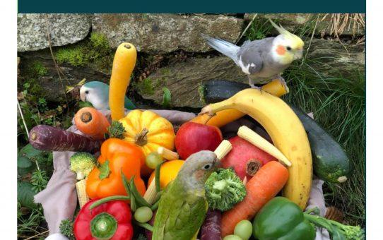 101 Food Items For Birds - E-Book