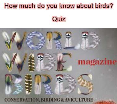 Bird quizzes