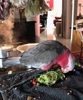 vegetables leaves for parrots