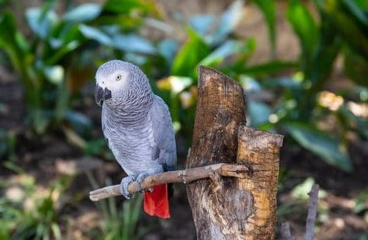 "Q & A: ""Animal protein as part of parrot diet ?"" - by Tony Silva"