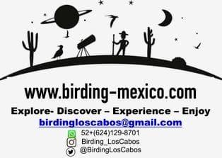 BirdingLos Cabos Mexico