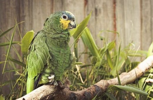 Can parrots be bred successfully indoors?