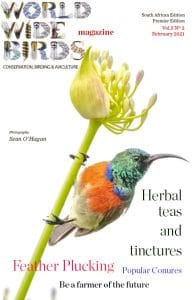Word Wide birds magazine South African February 2021