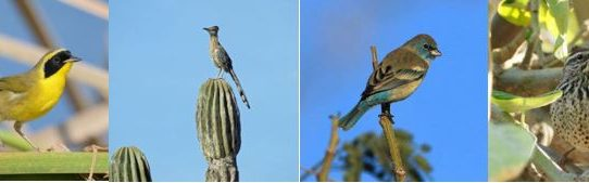 Endemic birds of Mexico