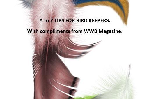Bird Feeding Tips for birds – E