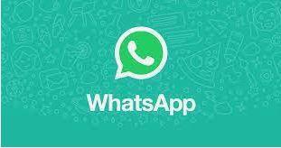 world wide birds WhatsApp group 2