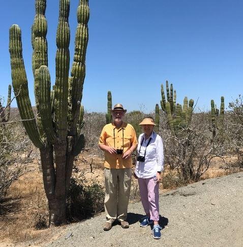 cardón desert cactus plant Mexico