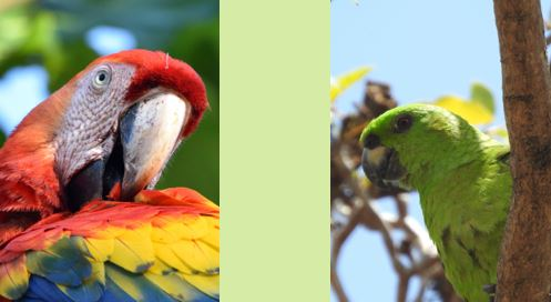 National Endangered Species Day